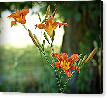 Bloom Where You're Planted Canvas Print by Cricket Hackmann