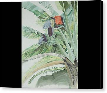 Blooming Banana Canvas Print by Hilda and Jose Garrancho