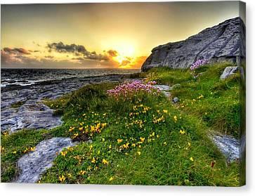 Blooming Burren Canvas Print