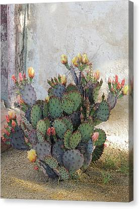 Blooming Cactus Canvas Print by Gordon Beck