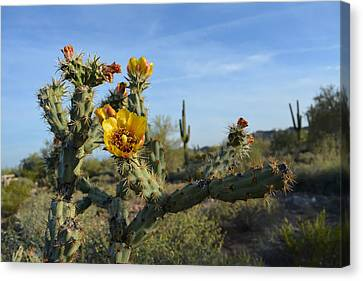 Blooming Desert Cactus Canvas Print by Aimee L Maher Photography and Art Visit ALMGallerydotcom