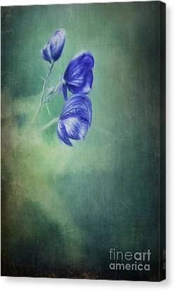 Blooming In The Dark Canvas Print by Priska Wettstein