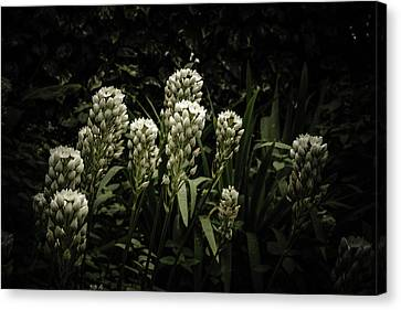 Canvas Print featuring the photograph Blooming In The Shadows by Marco Oliveira