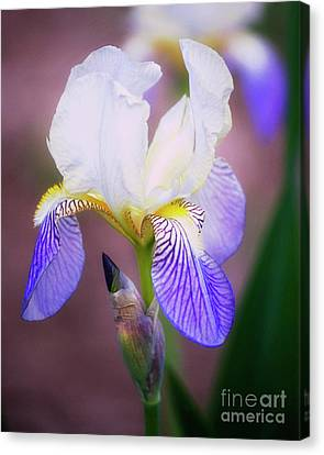 Blooming Iris Canvas Print by Shawn Bamberg