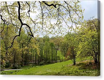 Blooming Landscape Canvas Print by Deborah  Crew-Johnson