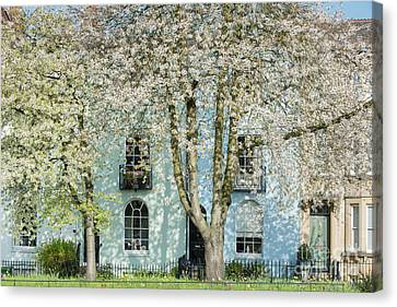 Cherry Tree Canvas Print - Blooming Oxford by Tim Gainey