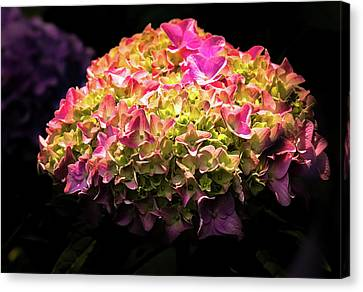 Canvas Print featuring the photograph Blooming Pink Hydrangea by Onyonet  Photo Studios