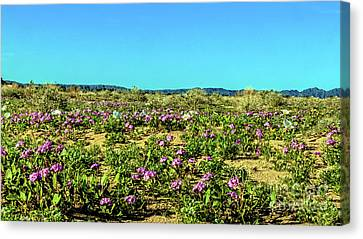 Canvas Print featuring the photograph Blooming Sand Verbena by Robert Bales