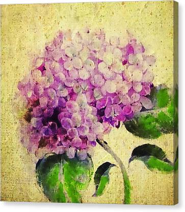 Blooming With Happiness - Hydrangea Canvas Print