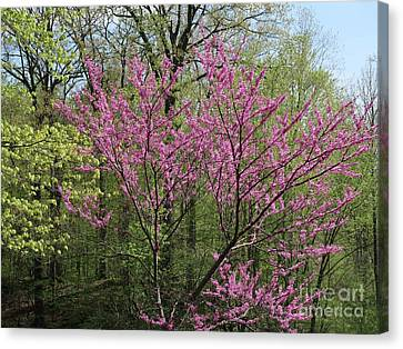 Blooming Woodland Canvas Print