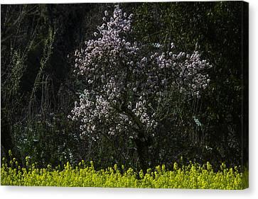 Bloosming Tree In Mustard Grass Canvas Print