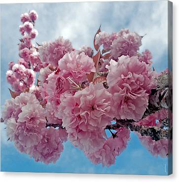 Blossom Bliss Canvas Print by Gwyn Newcombe