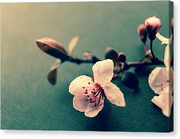 Blossom Canvas Print by Caitlyn Grasso