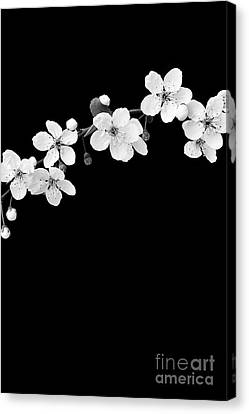 Blossom Canvas Print by Tim Gainey