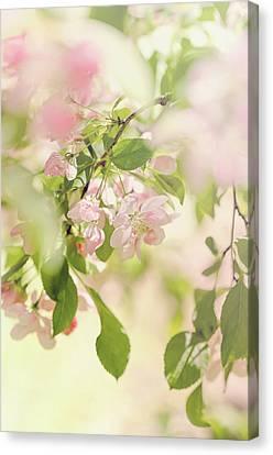 Dappled Light Canvas Print - Blossom Tree by Margaret Goodwin
