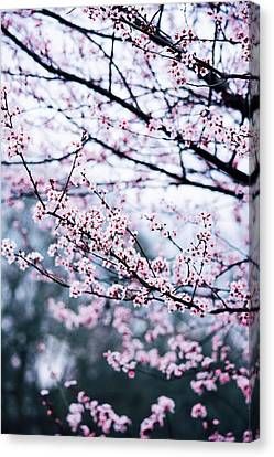 Canvas Print featuring the photograph Blossoming Buds by Parker Cunningham