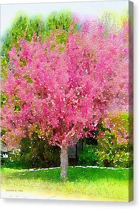 Blossoming Crabapple Tree Canvas Print by Donald S Hall