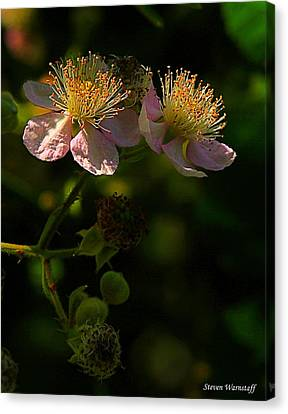 Blossoms 3 Canvas Print by Steve Warnstaff
