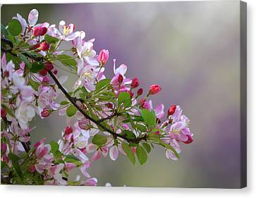 Canvas Print featuring the photograph Blossoms And Bokeh by Ann Bridges