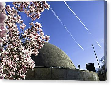Blossoms Canvas Print by Andrew Kubica