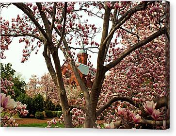 Blossoms At The Castle Canvas Print by Frank Garciarubio