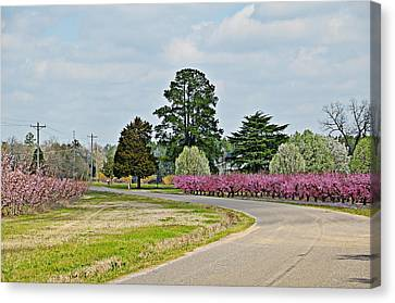Blossoms Everywhere Canvas Print by Linda Brown