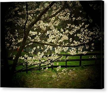 Blossoms Fence Canvas Print by Michael L Kimble