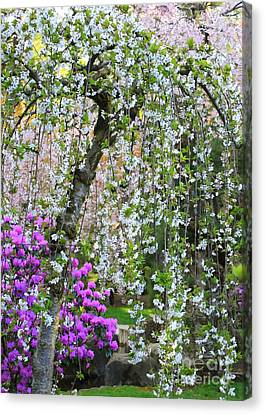 Blossoms Galore Canvas Print by Carol Groenen