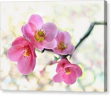 Canvas Print featuring the photograph Blossoms by Marion Cullen