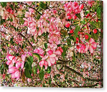 Canvas Print featuring the photograph Blossoms by Traci Cottingham