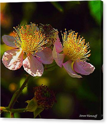 Blossoms.1 Canvas Print by Steve Warnstaff