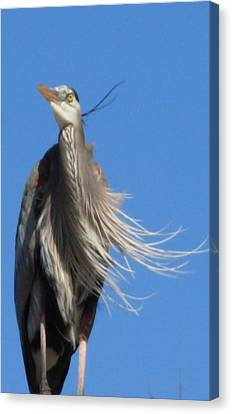 Canvas Print featuring the photograph Blowing In The Wind by Jeanne Kay Juhos