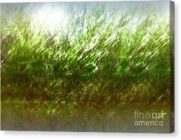 Canvas Print featuring the photograph Blowing In The Wind by John Krakora