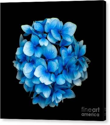 Blue Canvas Print by Adrian Evans