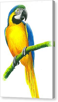 Blue And Gold Macaw Canvas Print by Christopher Cox
