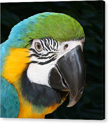 Blue And Gold Macaw Canvas Print - Blue And Gold Macaw Freehand Painting Square Format by Ernie Echols