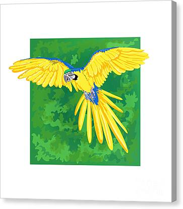 Blue And Gold Macaw Canvas Print by HD Connelly