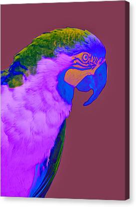 Canvas Print featuring the photograph Blue And Gold Macaw Sabattier by Bill Barber