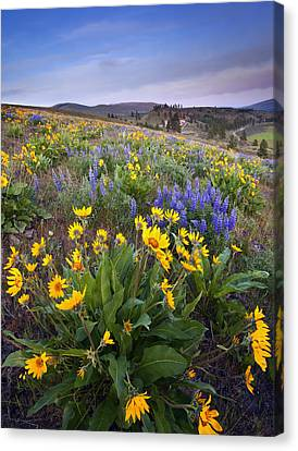 Blue And Gold Canvas Print by Mike  Dawson
