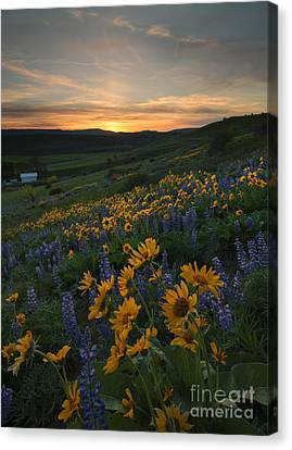 Blue And Gold Sunset Canvas Print by Mike Dawson