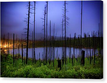 Canvas Print featuring the photograph Blue And Green by Cat Connor