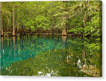 Blue And Green Waters At Manatee Canvas Print