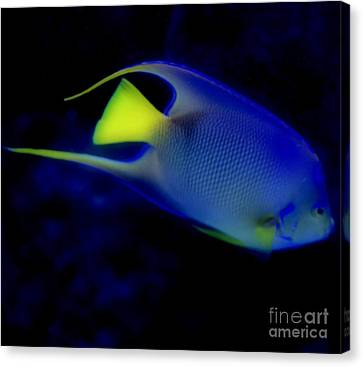 Blue And Yellow Fish Canvas Print by Kathleen Struckle