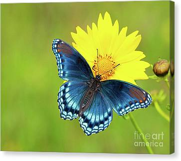 Blue And Yellow On Green Canvas Print