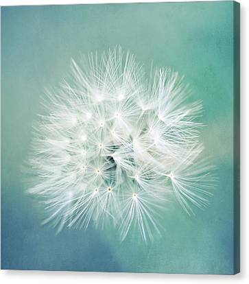Canvas Print featuring the photograph Blue Awakening by Trish Mistric