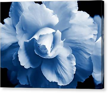 Blue Begonia Canvas Print - Blue Begonia Floral by Jennie Marie Schell
