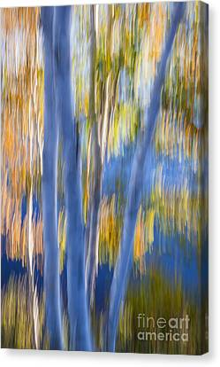 Blue Birches By The Lake Canvas Print by Elena Elisseeva