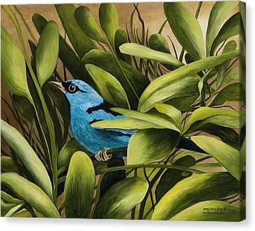 Blue Bird In Branson Canvas Print