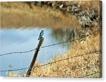 Blue Bird Canvas Print by Mario Brenes Simon