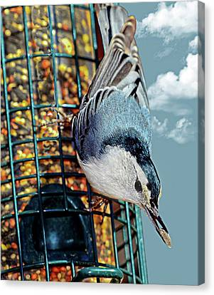 Blue Bird On Feeder Canvas Print by Susan Leggett